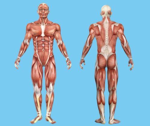 След интензивни и уморителни тренировки е задължително да дадете възможност на мускулите Ви да се възстановят, ако искате да прогресирате във фитнеса.
