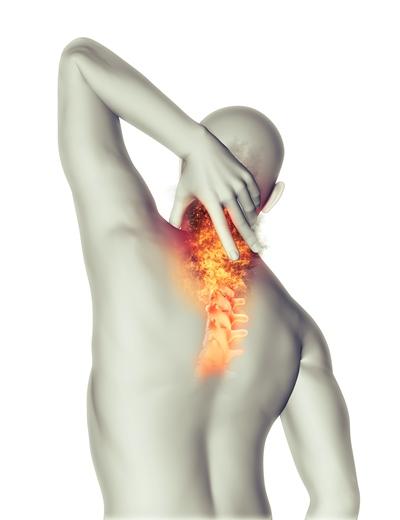Костите играят много роли в тялото – поддържат структурата, предпазват органите, държат мускулите и съхраняват калций.